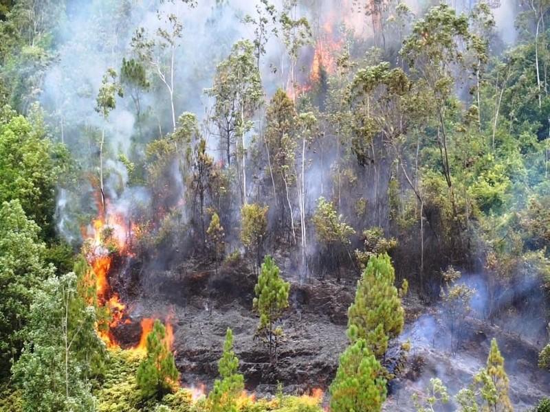 Đà Nẵng: Rừng tự nhiên cháy, dập lửa khó vì vướng dây leo - ảnh 1