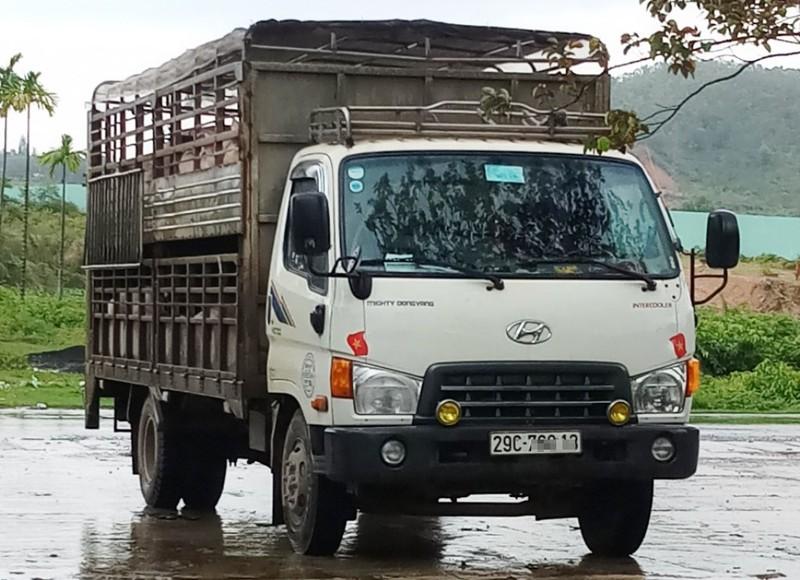 CSGT Đà Nẵng đuổi bắt xe tải chở heo vượt trạm kiểm dịch - ảnh 1