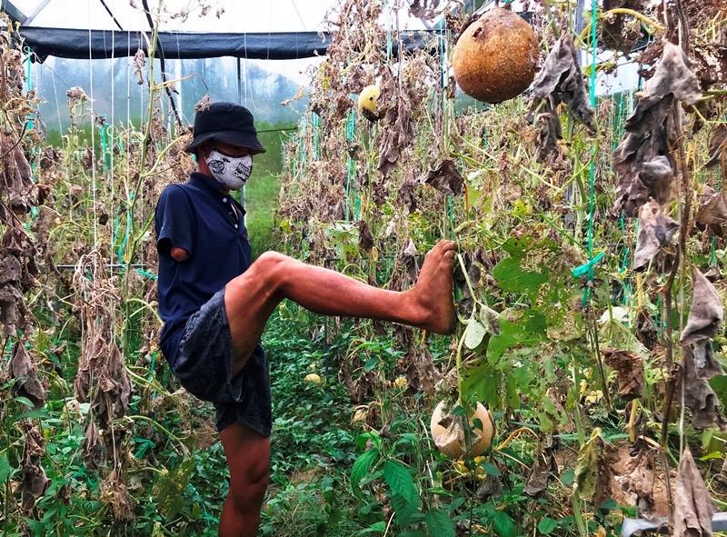 Anh nông dân cụt 2 tay trồng dưa lưới trắng tay vì COVID-19 - ảnh 2