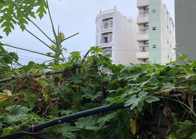 Thiếu niên rơi từ lầu 4 tại 1 chung cư ở Đà Nẵng tử vong  - ảnh 1