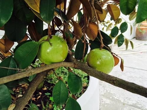 Biệt thự nhà vườn ngập hoa quả của diễn viên Việt Trinh - ảnh 18