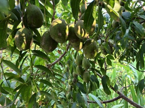 Biệt thự nhà vườn ngập hoa quả của diễn viên Việt Trinh - ảnh 5