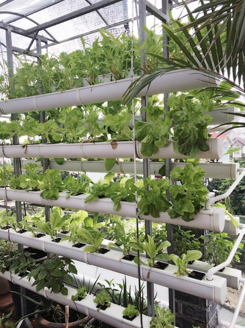 Vườn rau sạch trong ngôi nhà triệu đô của sao Việt - ảnh 11