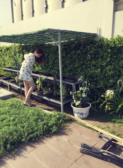 Vườn rau sạch trong ngôi nhà triệu đô của sao Việt - ảnh 2