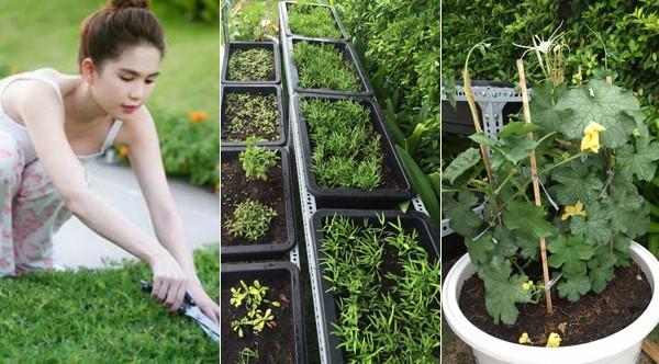 Vườn rau sạch trong ngôi nhà triệu đô của sao Việt - ảnh 1