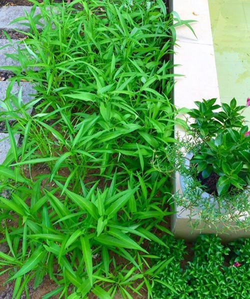 Vườn rau sạch trong ngôi nhà triệu đô của sao Việt - ảnh 24