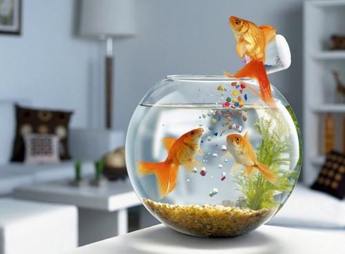 Những vị trí tuyệt đối tránh khi đặt bể cá trong nhà - ảnh 4
