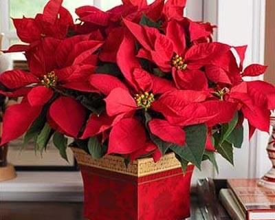 Mẹo phong thủy trang trí nhà cửa trong mùa Giáng sinh - ảnh 2