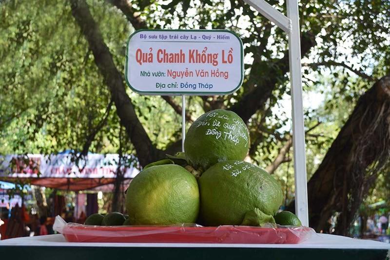 Lễ hội trái cây Nam bộ: 1.000 tấn trái cây an toàn, giá rẻ - ảnh 1