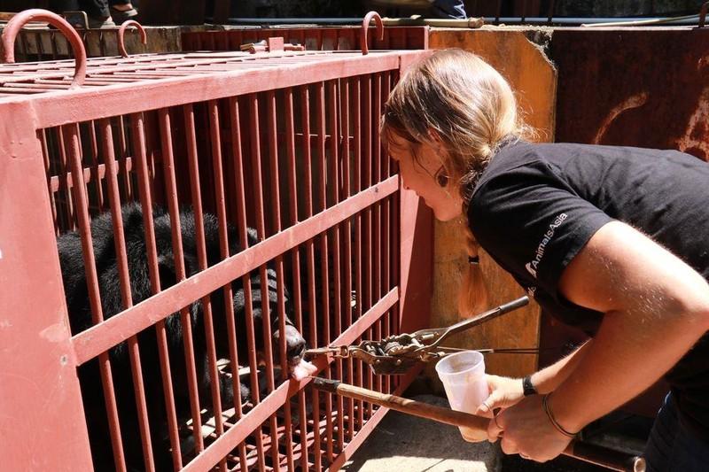 Cứu hộ bốn cá thể gấu ngựa tại Nha Trang  - ảnh 1