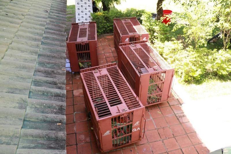 Cứu hộ bốn cá thể gấu ngựa tại Nha Trang  - ảnh 4