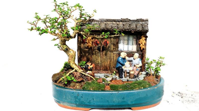 Gặp người sở hữu bộ sưu tập bonsai mini kỷ lục thế giới  - ảnh 2