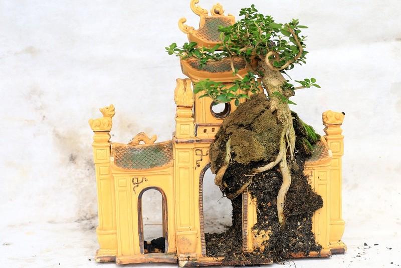 Gặp người sở hữu bộ sưu tập bonsai mini kỷ lục thế giới  - ảnh 3