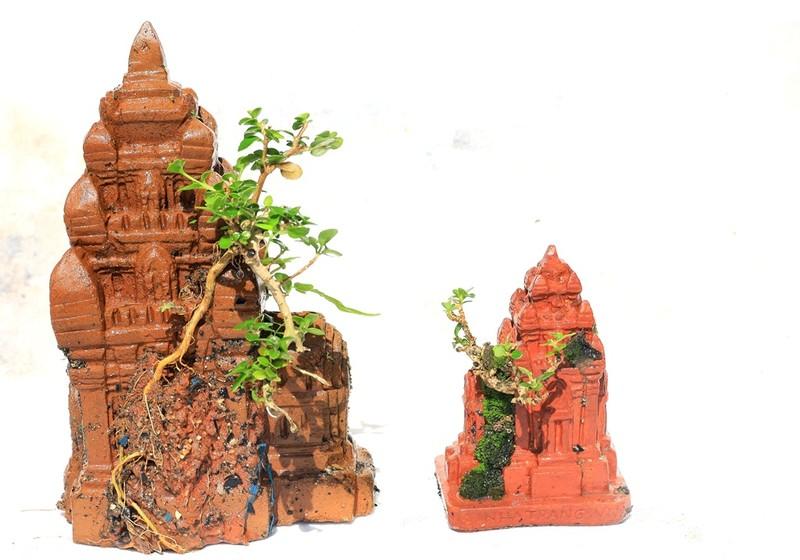Gặp người sở hữu bộ sưu tập bonsai mini kỷ lục thế giới  - ảnh 5