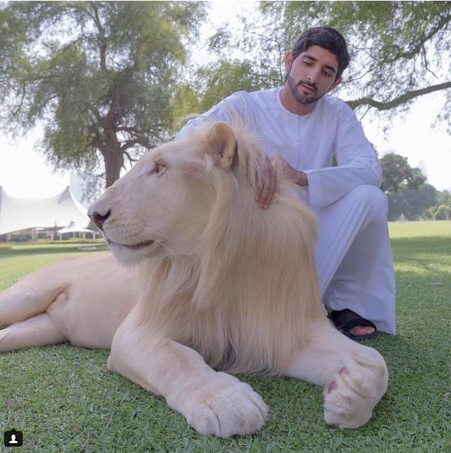 Hoàng tử Dubai Mohammed bin Rashid Al Maktoum và vật nuôi của mình.
