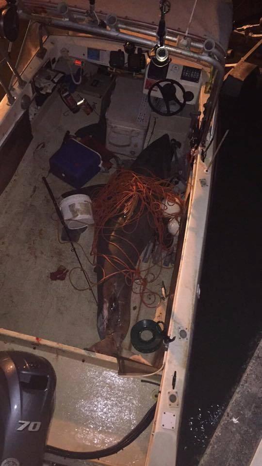 Hình ảnh con cá mập trắng nằm trên thuyền ông lão Selwood đăng trên trang FACEBOOK của lực lượng bảo vệ bờ biển Evans Head, và được chia sẻ hơn 2.000 lần.