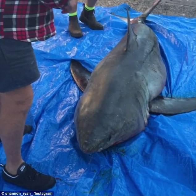 Con cá mập được đưa ra khỏi thuyền. Ảnh: INSTAGRAM