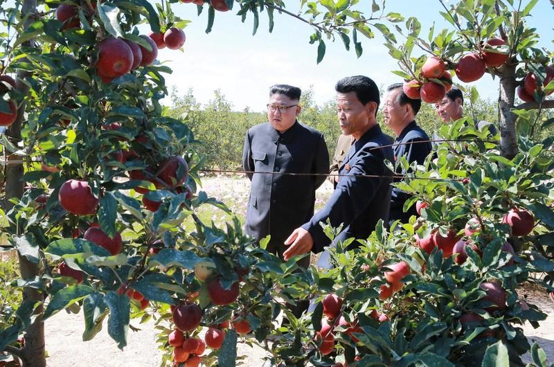 Ông Kim Jong-un (trái) trong một chuyến đi thăm vườn táo ở Bình Nhưỡng. Ảnh: KCNA công bố ngày 21-9