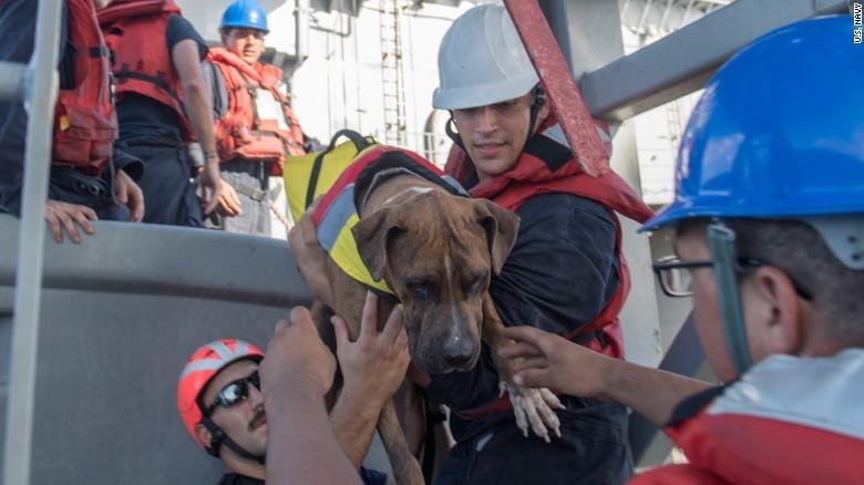 Chú chó Zeus được các thủy thủ giúp đỡ chuyển lên tàu USS Ashland. Ảnh: CNN