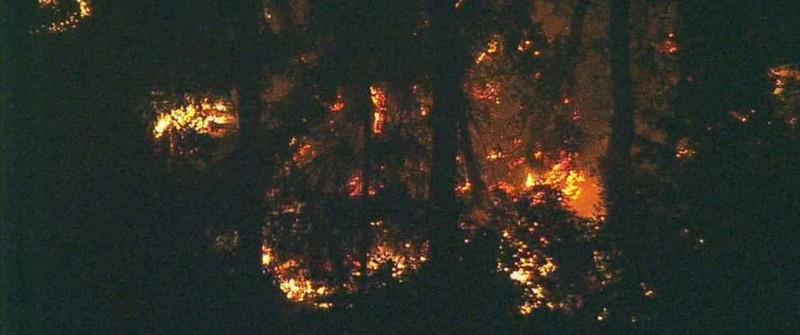 Lửa bốc cháy khu vực chiếc máy bay Q400 rơi ở đảo Ketorn, bang Washington (Mỹ) cuối ngày 10-8. Ảnh: ABC NEWS