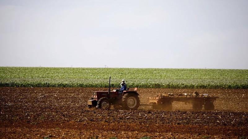 Một trang trại ở tỉnh Limpopo (bắc Nam Phi). Ảnh: REUTERS