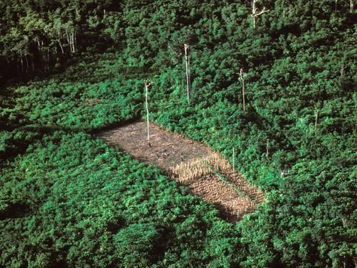Một khoảnh rừng Amazon bị phát quang năm 1990. Ảnh: GETTY IMAGES