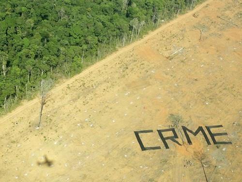 Tổ chức môi trường Greenpeace gọi hành động phá rừng là tội ác - Crime. Ảnh: REUTERS