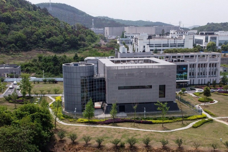 Viện Virus học Vũ Hán, WHO bị tấn công mạng - ảnh 1