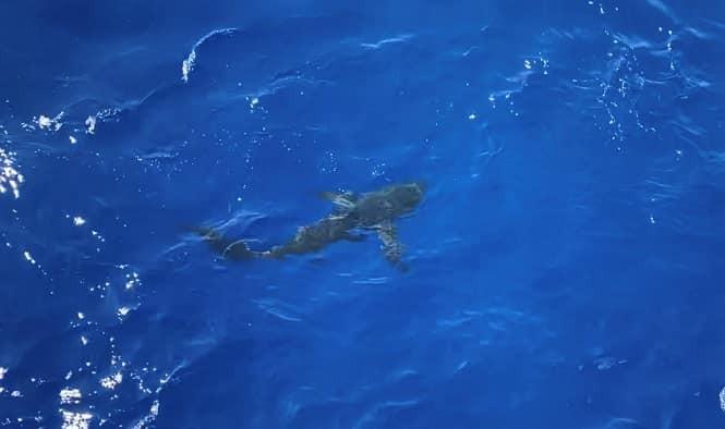 Chùm ảnh: Thủy thủ Mỹ nổ súng chặn cá mập giữa đông người bơi - ảnh 6
