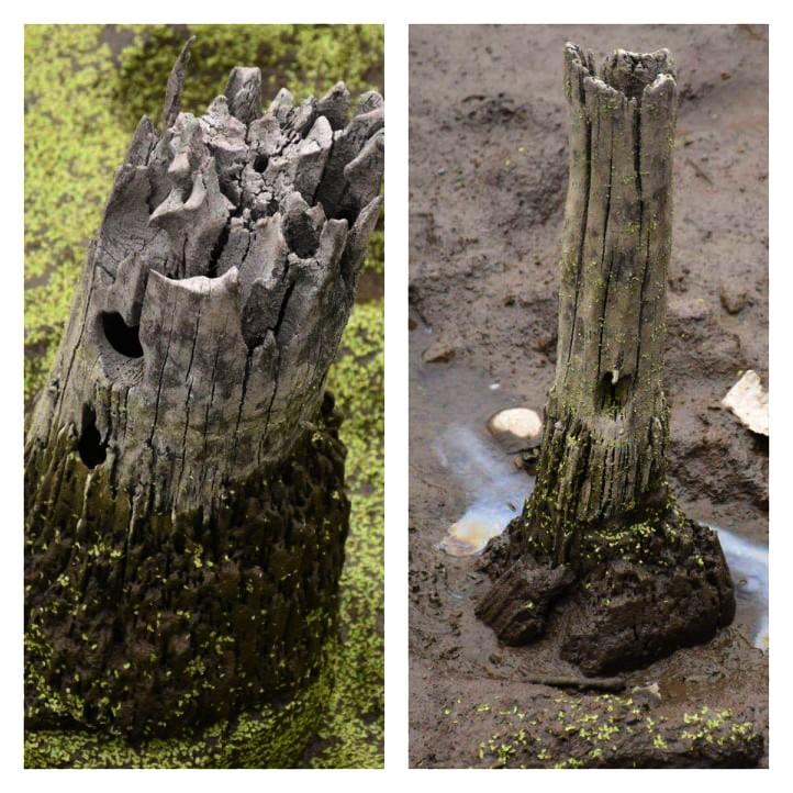 Phát hiện bãi cọc gỗ cổ nghi cọc Bạch Đằng nơi ngã 3 sông - ảnh 2