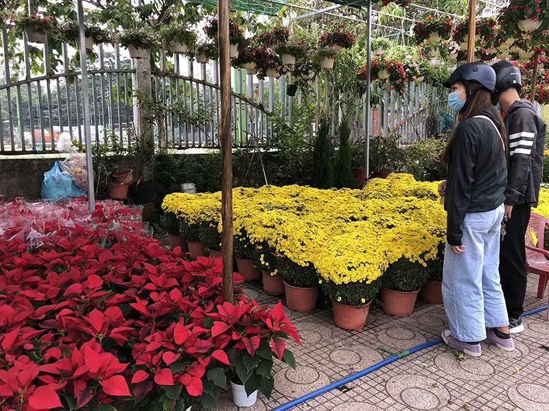 Hoa, nông sản tết: Kẻ cười, người khóc - ảnh 3