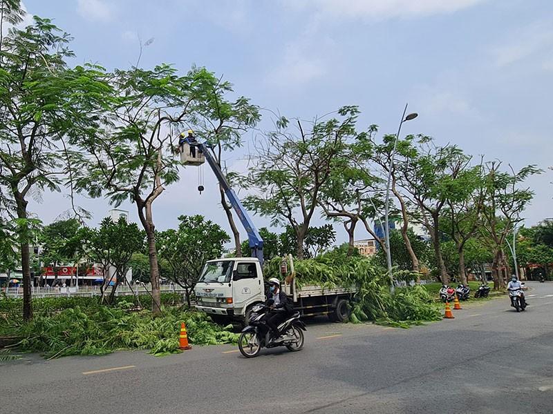 Báo sự cố cây xanh mùa mưa: Gọi 1022 - ảnh 1
