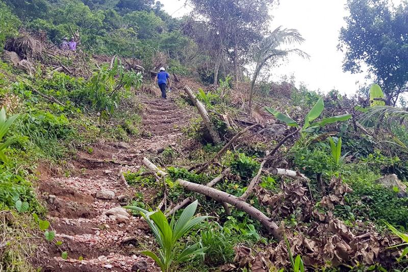 Sai phạm hàng tỉ đồng ở Ban quản lý rừng Kiên Giang - ảnh 1
