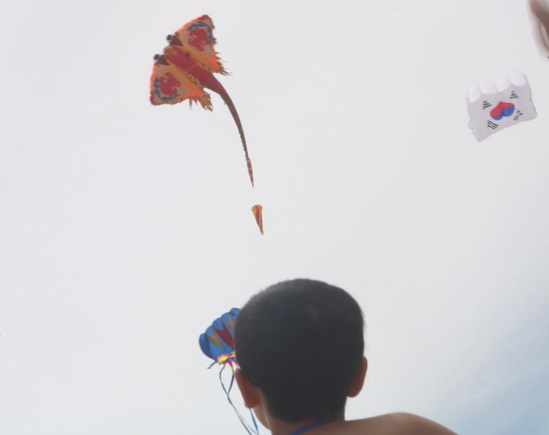 Ảnh: Độc đáo 'động vật biển' bay lên trời - ảnh 4