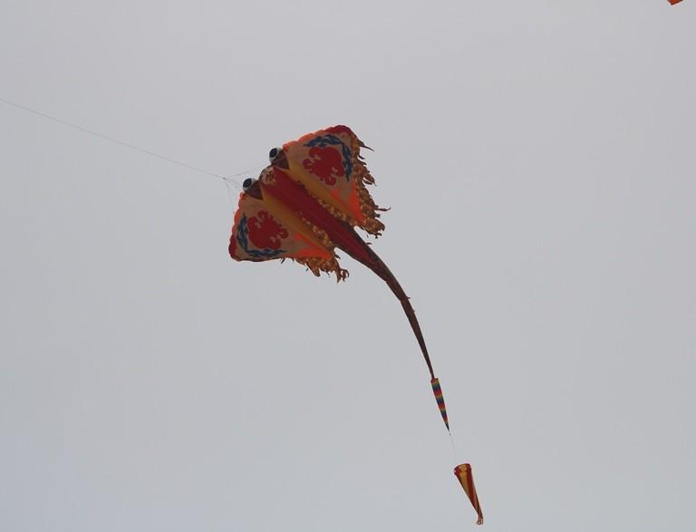 Ảnh: Độc đáo 'động vật biển' bay lên trời - ảnh 18
