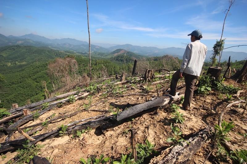 Khởi tố 1 bị can trong vụ phá hơn trăm ha rừng - ảnh 2