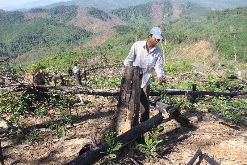 Khởi tố 1 bị can trong vụ phá hơn trăm ha rừng - ảnh 3