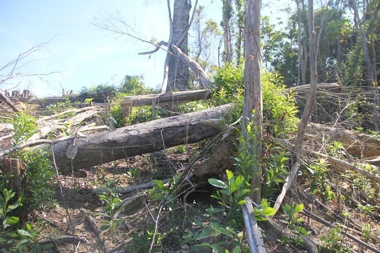Khởi tố 1 bị can trong vụ phá hơn trăm ha rừng - ảnh 1