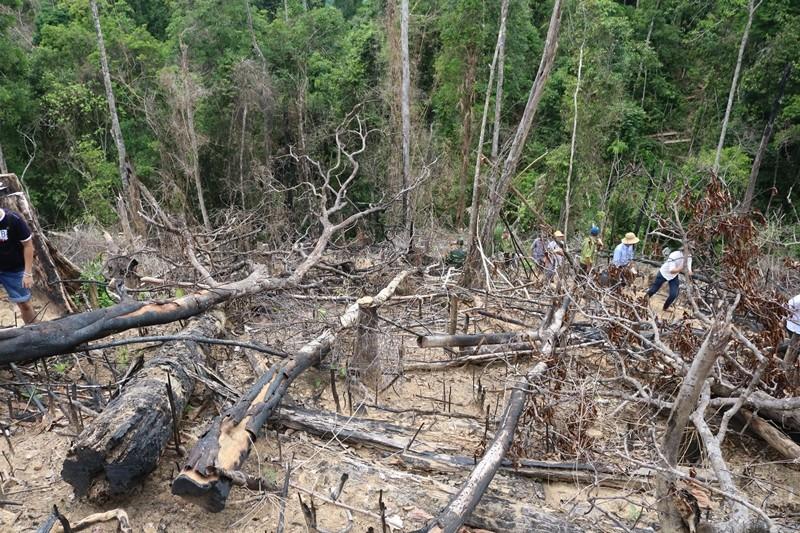 Bắt nguyên giám đốc BQL rừng phòng hộ Sông Tranh - ảnh 1