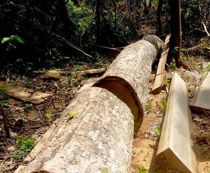 Thêm 2 cán bộ BQL rừng phòng hộ Sông Tranh bị bắt - ảnh 1