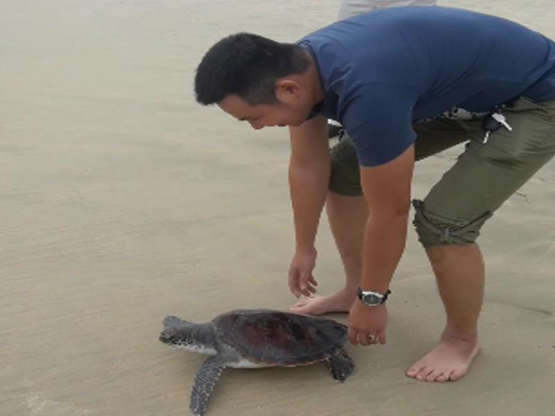 Chủ nhà hàng mua được rùa quý đem thả về đại dương - ảnh 1