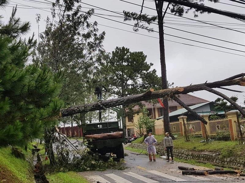 Lâm Đồng: Mưa lớn làm đổ cây, quốc lộ bị chia cắt - ảnh 3