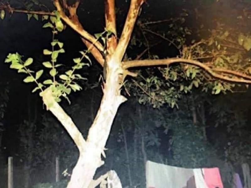 Đắk Lắk: Một người phụ nữ treo cổ trên cây ổi tử vong - ảnh 1