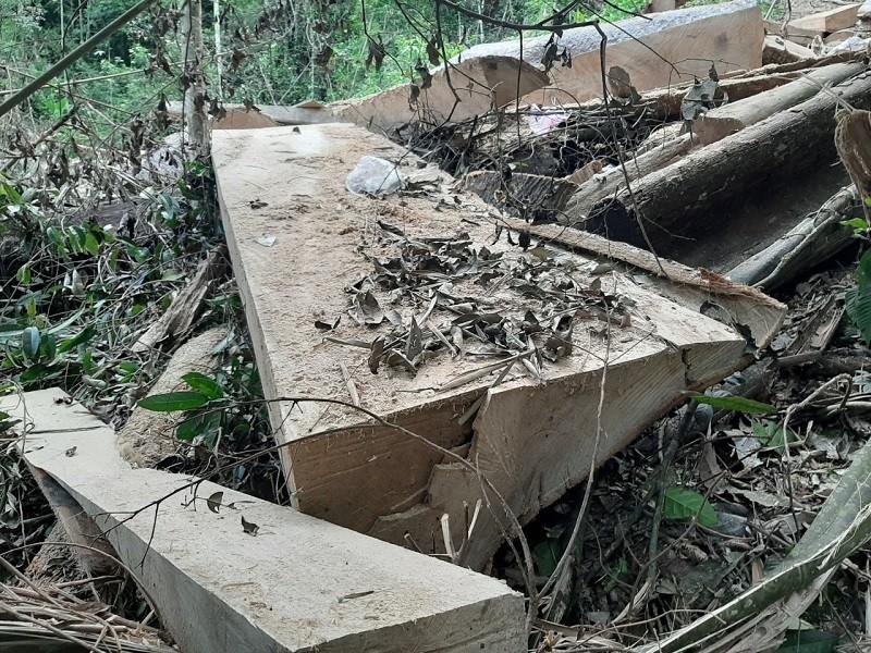 Xác định nhóm nghi can phá rừng đặc dụng Nam Kar - ảnh 2