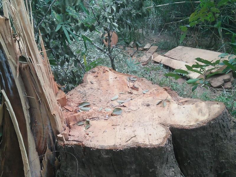 Xác định nhóm nghi can phá rừng đặc dụng Nam Kar - ảnh 1