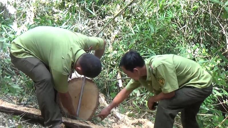 Phát hiện nhiều điểm tập kết gỗ ở rừng đặc dụng Nam Kar - ảnh 3