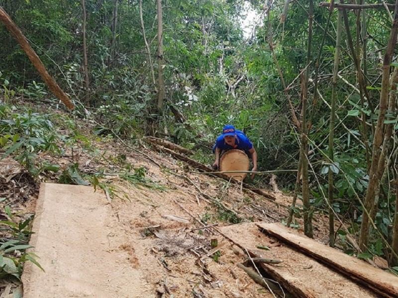 Sở Nông nghiệp nêu trách nhiệm vụ phá rừng đặc dụng Nam Kar - ảnh 1