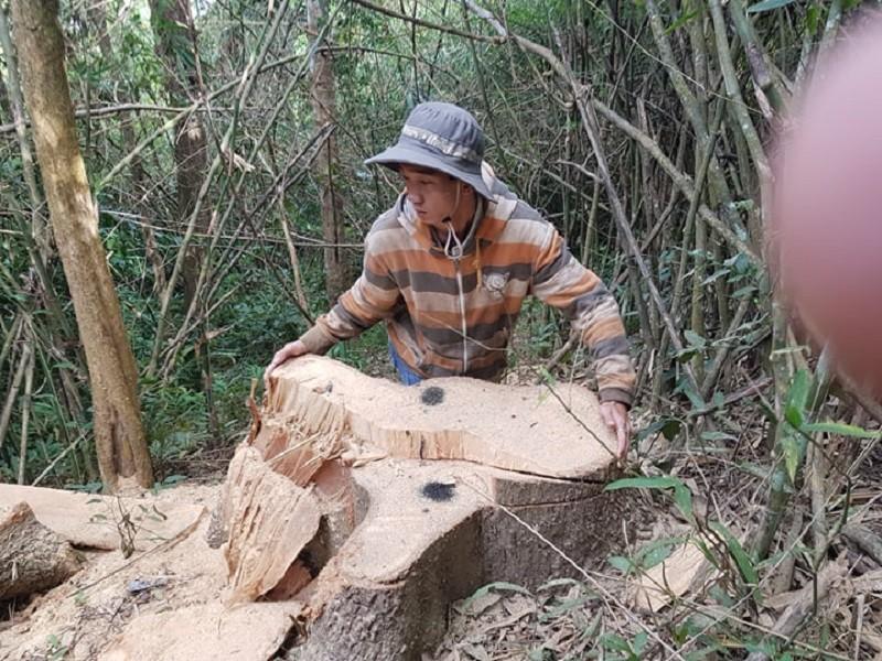 Sở Nông nghiệp nêu trách nhiệm vụ phá rừng đặc dụng Nam Kar - ảnh 2