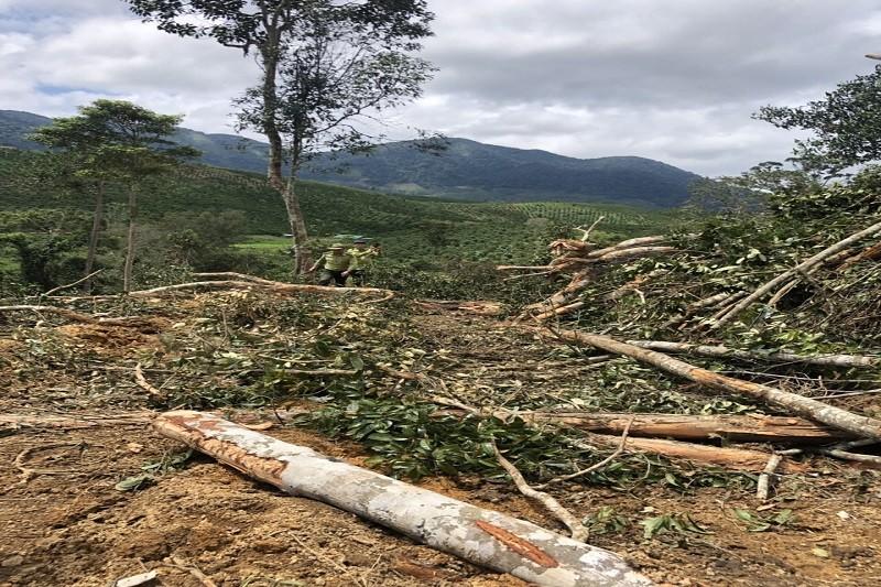 Khởi tố vụ phá rừng bằng máy múc ở Lâm Đồng - ảnh 2