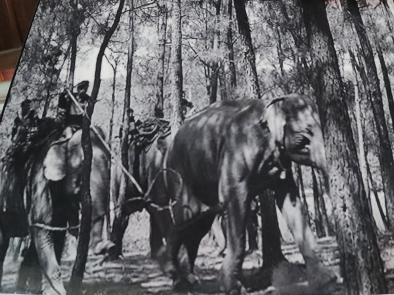 Ngày tết con trai Ama Kông kể chuyện săn voi trắng  - ảnh 4